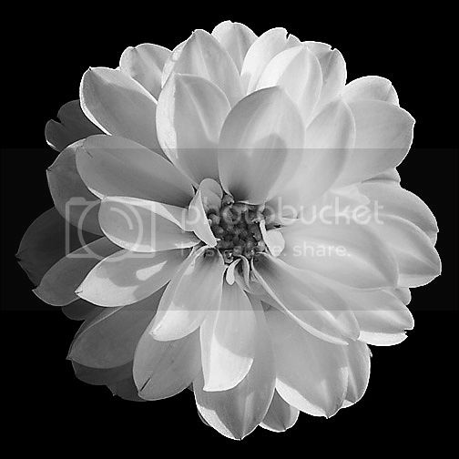 photo black-and-white-flower-photography.jpg